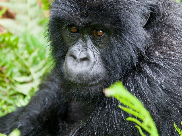 Virunga Primates and Mafia Island Photos