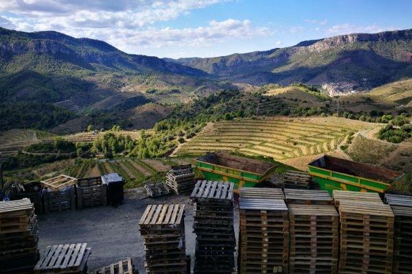 Wines of Catalunya: DOQ Priorat Photos