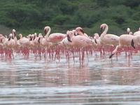 11 Days Kenya safari.