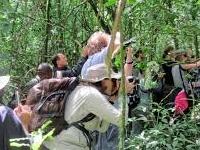 Gorilla and Chimpanzee Filming Kibale and Bwindi