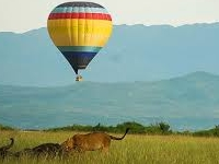 Balloon and Gorilla Tracking