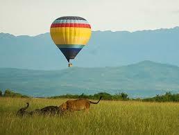 Balloon and Gorilla Tracking Photos