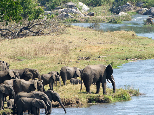 Conservation Malawi Photos