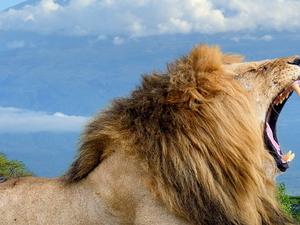 Amboseli National Park Fotos