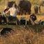 Honeymoon Kubwafive Safaris
