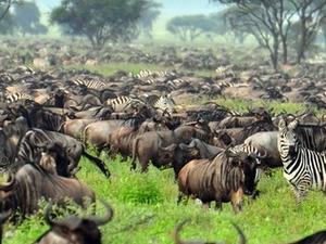 Triangle Safari: Masai Mara Safari Fotos