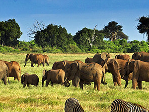 Decagon Safari: Wonders of Kenya Safari