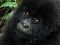 Unlocking Rwanda & Uganda Odyssey
