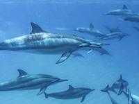 Marine Dolphins