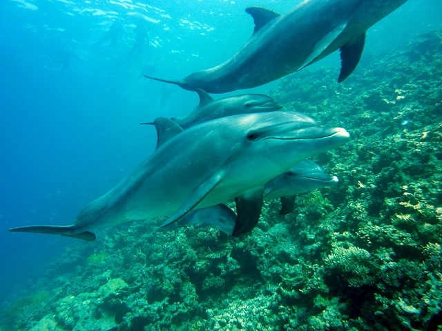 Swimming With Dolphins Photos
