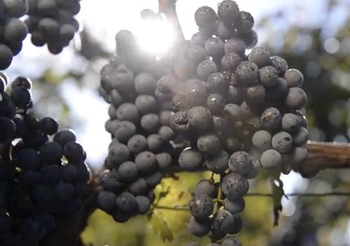 Podgorica Wine Route Photos