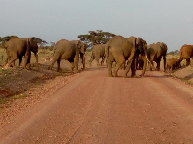 Tsavo and Amboseli Safari Photos