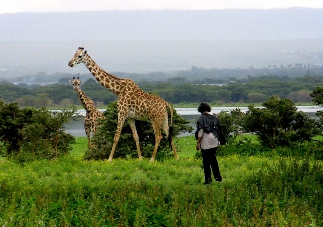 Kenya Safari and Mombasa Beach Holidays Photos