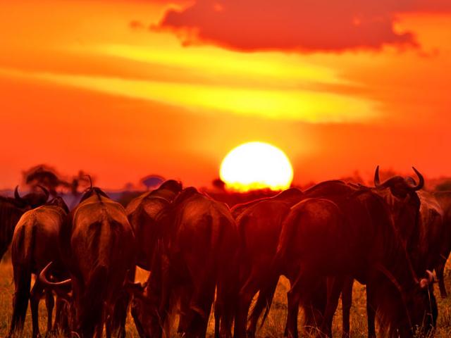 Best of Tanzania and Kenya Safari Photos