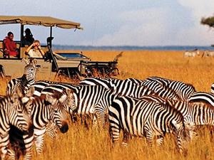 Tanzania & Kenya Lodge Safari Fotos