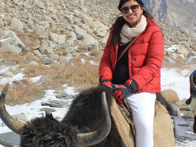 Yak Safari Batura Glacier Passu Pakistan Photos