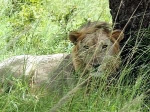 Mikumi National Park Day Trip Safari Photos