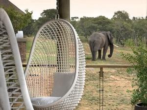 Mhondoro Safari Lodge and Villa Photos