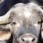 Buffels Reserve