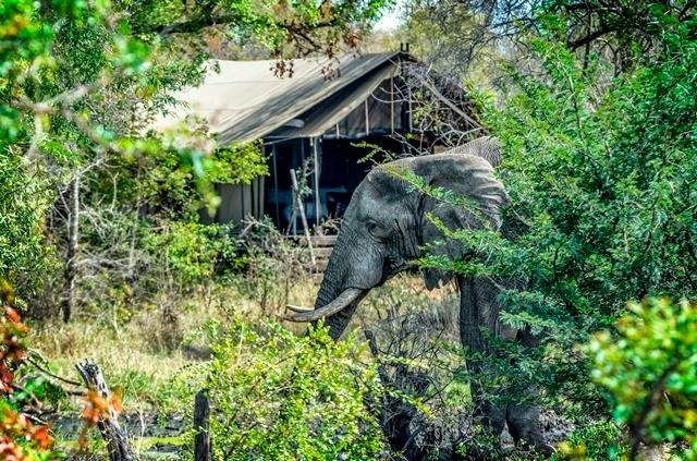 Honeyguide Kruger Safari Photos