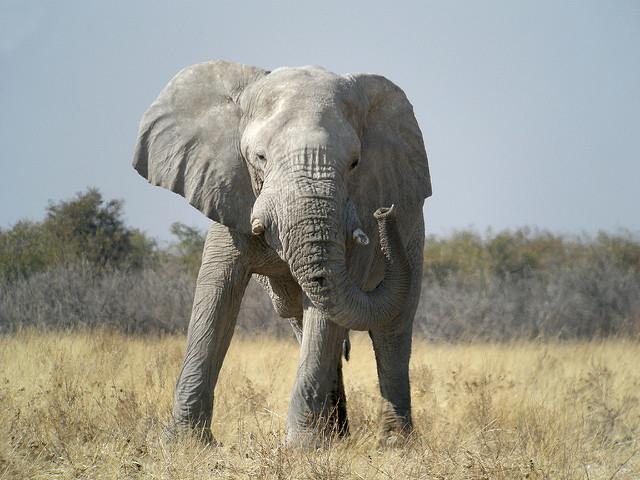 Etosha Private Safari 4 Days (Lodges) Photos