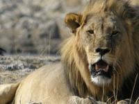 Etosha Private Safari 4 Days (Lodges)