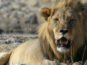 Etosha Private Safari 4 Days (Lodges) Photos