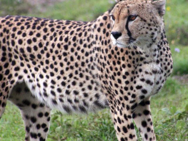 6-day Game Safari in Northern Tanzania Photos