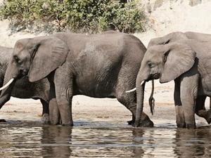 10 Days Botswana Adventure And Victoria Falls Safari - Camping