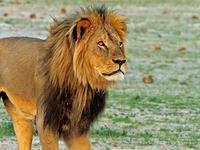 10 Days Namibian Family Adventure Safari (Accommodated )