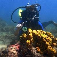Mergulho com cilindro em barreira de corais Photos