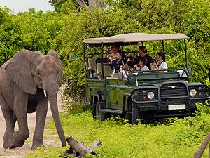 1 Day Trip To Chobe National Park Botswana Photos