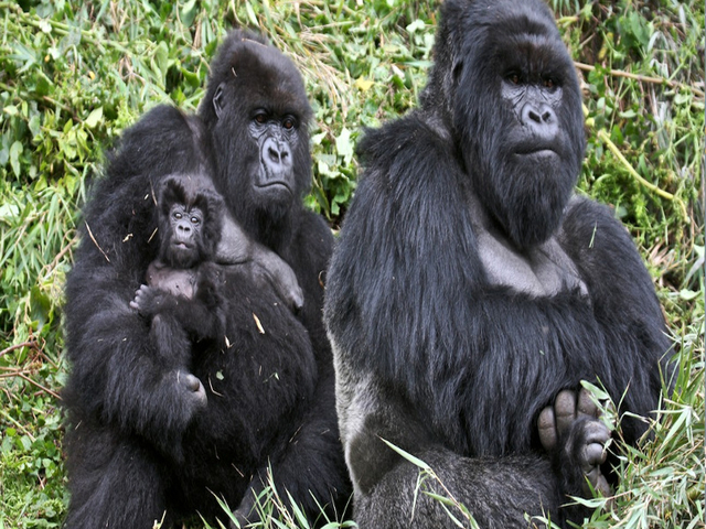 Primates Safari Uganda Photos