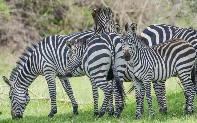 4 Day Uganda Safari Photos