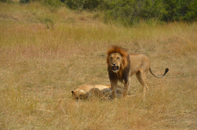 7 Days Masai Mara And Mombasa Safari - Bush And Beach Photos