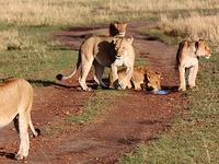 Masaimara Kenya