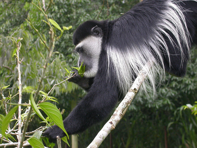6 Days-Primate-Safari-Bwindi-and-Kibale National Park Photos
