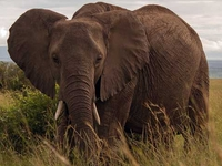 8 Days Superb Tanzania & Kenya Tour