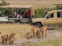 6 Day Safari in Masai Mara and Amboseli