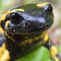 Reptilecitytx