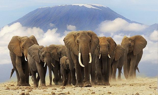 5 Nights 6 Days in Masai Mara,Lake Nakuru ,Amboseli safari Photos
