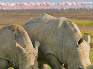 5 Days Masai Mara and Lake Nakuru National Park