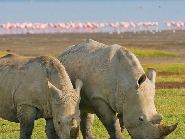5 Days Masai Mara and Lake Nakuru National Park Photos