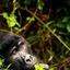 Bwindi Conservationists
