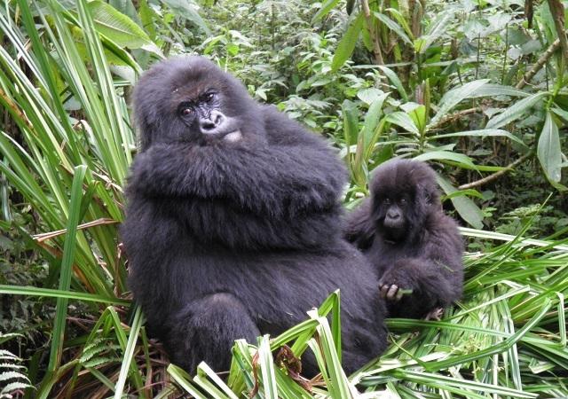 5 Day Gorilla Experience Photos