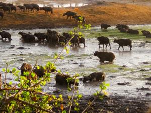 9 Days Tanzania Safari Fotos