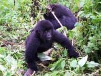 Bwindi Impenetrable National Park Tour