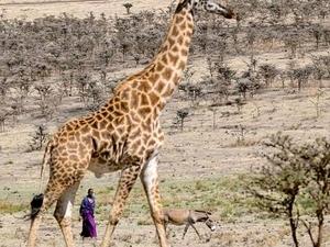 3 Days Safari in Northern Tanzania Photos