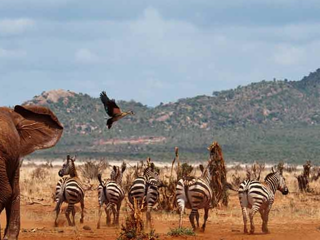 8 Days Tsavo West National Park/ Amboseli/ Lake Naivasha Photos