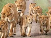 Seven Days Wildlife Uganda